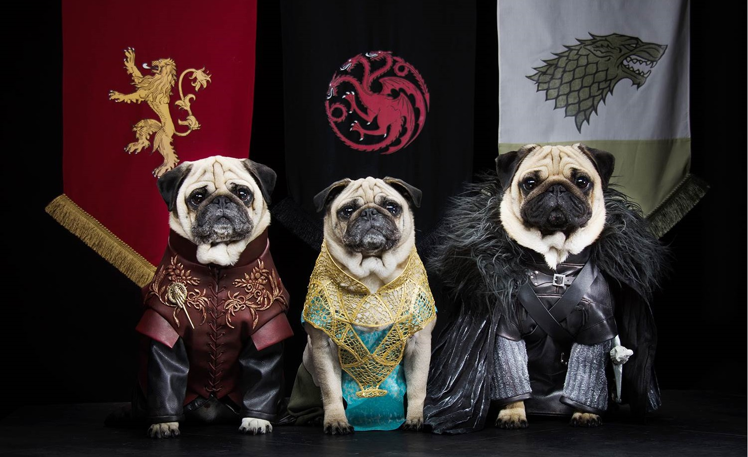 Game Of Thrones Pugs FEAT